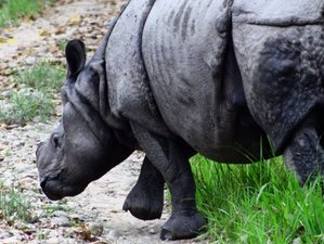 6 Day Historical Sightseeing and Chitwan Wildlife Tour in Nepal