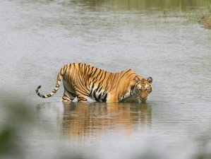5 Day Nature Safari in Bardia National Park, Bheri Zone