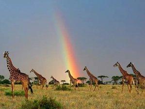 6 Days Enchanted Journey Safari in Tanzania