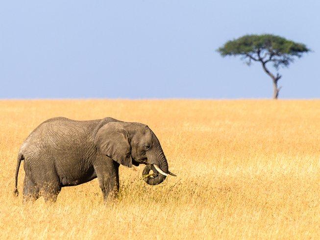 8 Days Photography Safari in Kenya