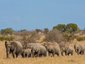 4 Days Unforgettable Classic Safari in Kruger National Park, South Africa