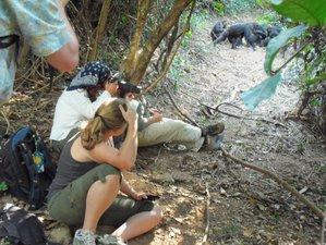 3 días de trekking de avistamiento de chimpancés en Tanzania