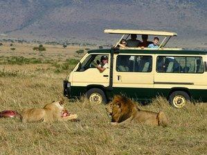 5 Days Widlife Safari in Masai Mara, Lake Nakuru, Hell's Gate, and Lake Naivasha, Kenya