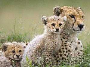 7 Days Masai Mara, Lake Nakuru, Lake Naivasha, Amboseli Adventure Budget Safari in Kenya