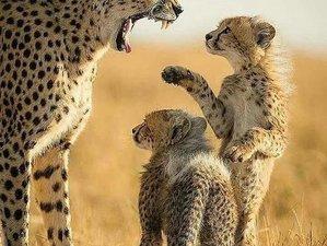 10 Days Wonderful Wildlife Safari in Kenya and Tanzania
