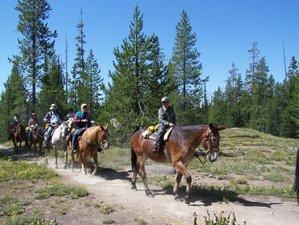 7 Day Pack Trip Through Yellowstone National Park, Montana