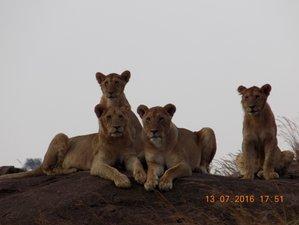 12 Days Group Joining Maasai Mara ,Lake Nakuru,Amboseli, Tanganyire. Ngorongoro,Serengeti, L.Manyara