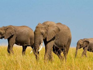 5 Days Exciting Private Camping Safari in Tanzania