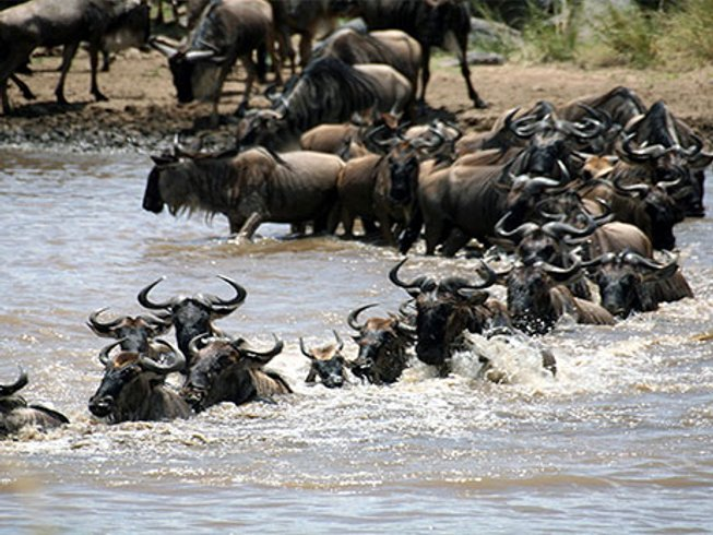 12 Days Big Five Wildlife  Tanzania and Kenya Safari