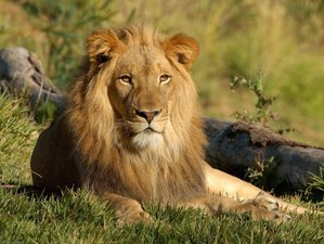 2 Days Kruger National Park Safari in South Africa