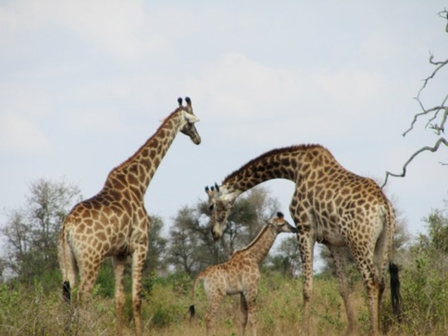 5 Days Private Safari in Kruger National Park