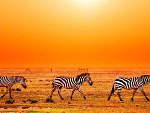 7 Days Exciting Camping Safari in Tanzania