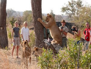 5 Days Hwange National Park and Victoria Falls Safari in Zimbabwe