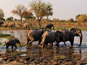 4 Day Authentic Mobile Tented Camping Safari Chobe National Park and Moremi Game Reserve, Botswana