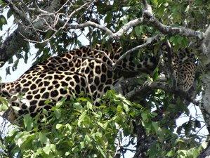 5 Days Nairobi to Lake Nakuru Wildlife Safari in Kenya