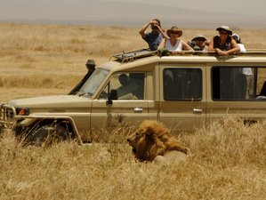 4 Days Amazing Group Safari Adventure in Tanzania