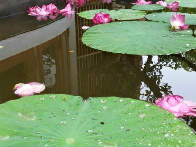 7 Days Kundalini Yoga Retreat Sri Lanka
