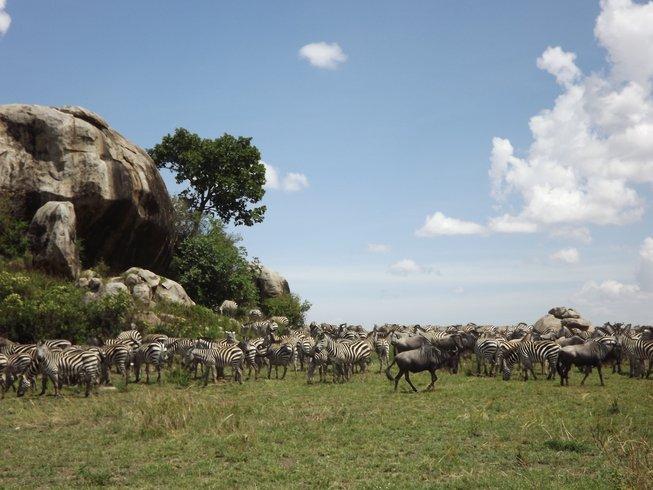 7 Days Lake Manyara, Serengeti, and Ngorongoro Crater Safari in Tanzania