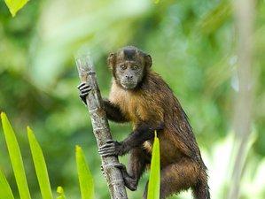 2 Day The Awakening Tour Safari in Tamshiyacu Tahuayo Communal Regional Conservation Area, Loreto
