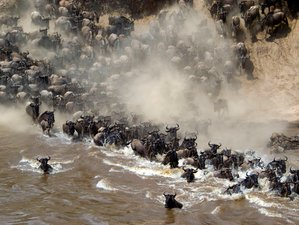 7 Days Wildebeest Migration Kenya Safari
