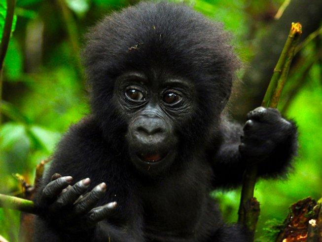 5 Days Gorilla Trekking Safari in Uganda with Rafting