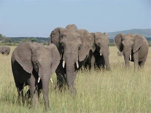 3 Days Budget Tsavo West and Tsavo East National Park Safari