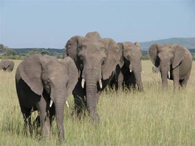 3 Days Budget Tsavo West and Tsavo East National Park Safari