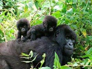 5 Days Bwindi, Queen Elizabeth, and Lake Mburo National Parks Safari and Gorilla Trekking in Uganda