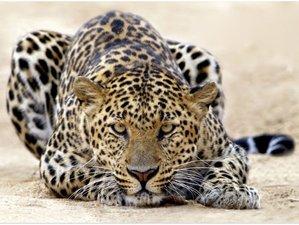 6 Days Classic Wildlife Safari in Northern Tanzania