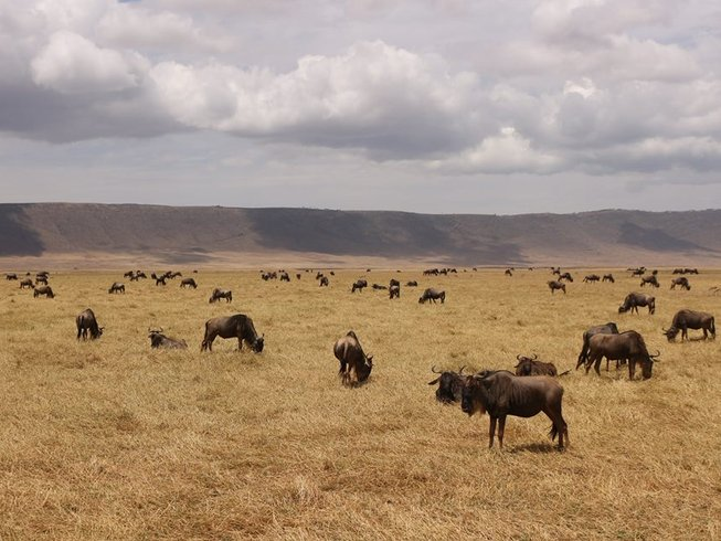 7 Days Wildlife Adventure Safari in Tanzania