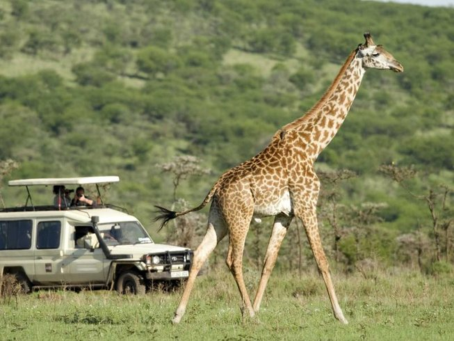 8 Days Ngorongoro and Serengeti Safari in Tanzania