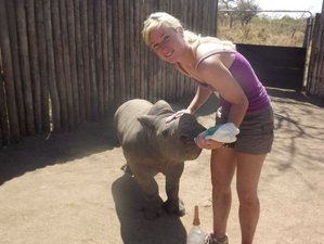 14 Days Rhino Care and Conservation Safari in South Africa