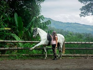 10 Day Natural Horsemanship and Trail Riding Holiday in Tucurrique, Cartago