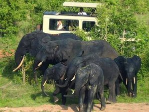 4 Day Luxurious Wildlife Safari in Mole National Park Ghana