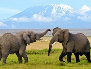 6 Days Explore the Heart of Africa Safari in Maasai Mara, Lake Nakuru and Amboseli, Kenya