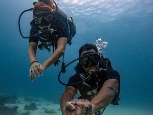 3 Tage Level 1 Freitauchen in der Schönen Wasserwelt von Phuket, Thailand