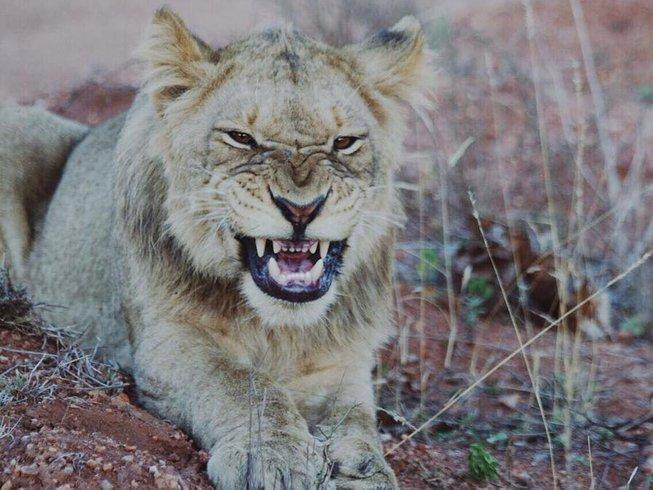 7 Days Family Safari South Africa