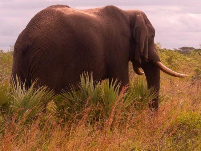 """10 Tage """"Reise von Herz & Seele"""" Meditation, Yoga und Safari in Südafrika und Mosambik"""