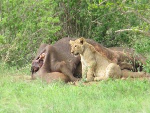 7 Days Discovery Tour Safari in Kenya