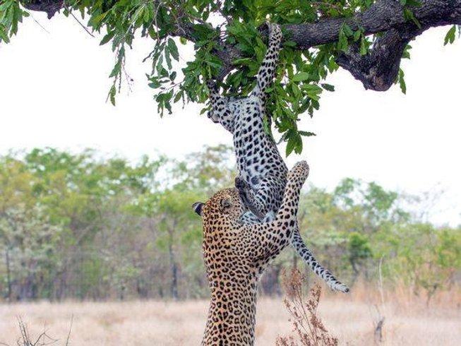 11 Days Family Safari South Africa