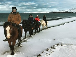 4 Days Winter Ride and Northern Lights Horse Riding Holiday in Iceland