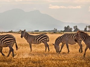 3 Days Amboseli Jumbo Safari in Kenya