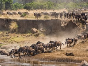 5 Days Maasai Mara, Lake Nakuru, and Lake Naivasha Group Safari in Kenya
