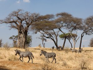 10 Days Most Popular Adventurous Safari and Relaxing Beach Combo Holiday in Tanzania