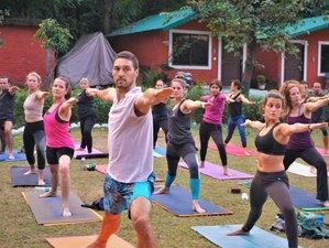 28 Day 200 Hours Vinyasa /Hatha /Ashtanga based Yoga Teacher Training in Rishikesh