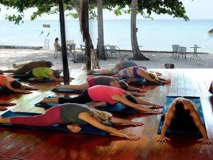 29 jours en retraite de yoga, méditation, guérison et éveil à Koh Phangan, Thaïlande