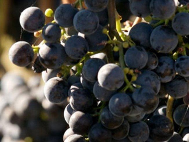 5 Days Luxury Wine Tours Spain