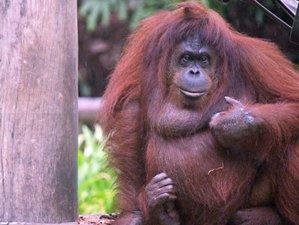 3 Day Wildlife Tour in Kinabatangan, Malaysia