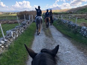 4 Day Mini Trail Horse Riding Holiday in County Mayo