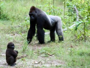 4 Days Volcanoes National Park Safari in Rwanda